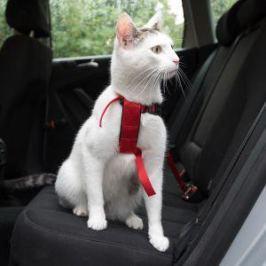 Postroj (trixie) bezpečnostní pro kočku 20-50cm
